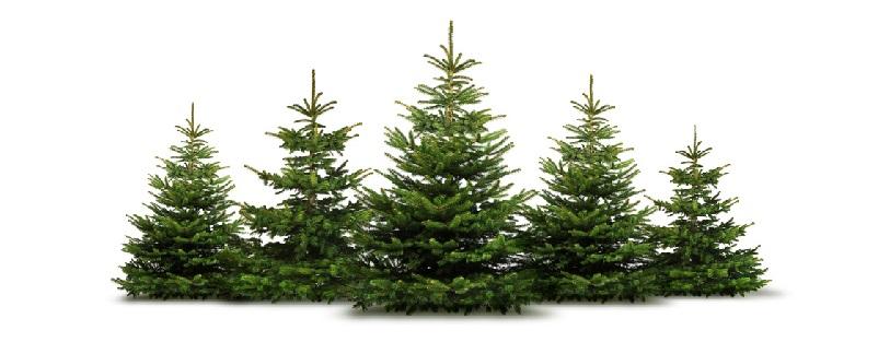 Wien Weihnachtsbaum Kaufen.Der Christbaum Aus Niederösterreich Christbäume Aus Dem Südlichen